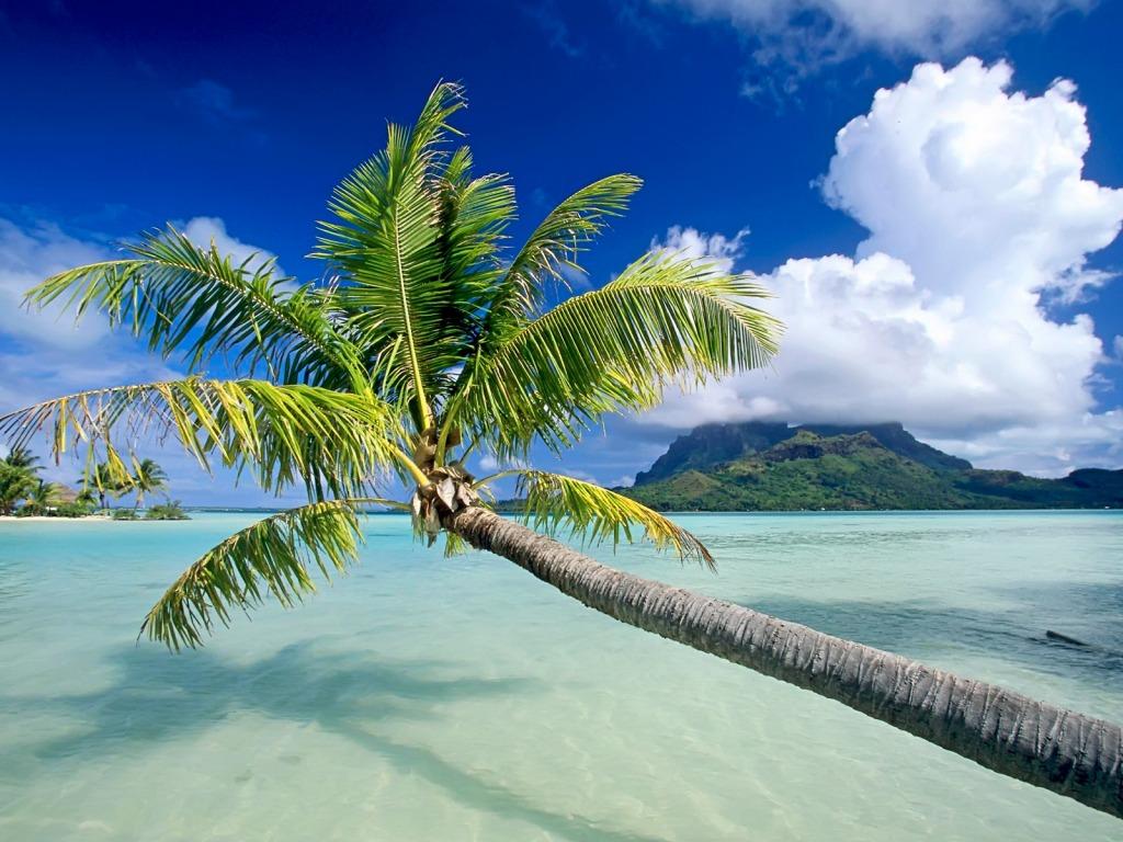 Plage Bora Bora Fond Ecran 1 Neorizons Bien Etre Eco Responsabilite Et Voyage Sur Mesure