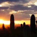 Saguaro Plant in Tucson, Arizona