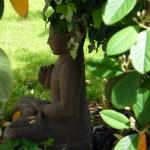 PassifloraVilla_jardin4