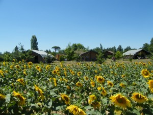 les-chalets-de-fiolles-location-camping-safari-lodge-a