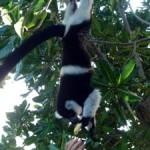 Lemuriens_ecolodge_les_lemuriens_neorizons