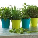 plantes-aromatiques_neorizons