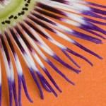 Anti-age-le-top-5-des-plantes-stimulantes_h_content_l_neorizons_plantesantiage