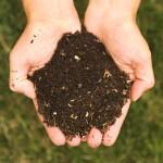 Compost_environnement_neorizons