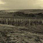 vignoble_chablis_bourgogne_neorizons