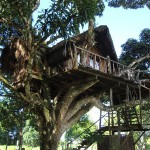 Cabane_Tarzan_ArtJungle_Ecolodge_and_Spa_Neorizons