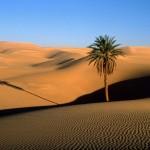 neorizons_Sahara