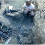 neorizons_fouilles_dinosaures