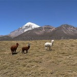 neorizons_parc_national_sajama
